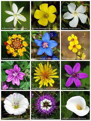File:451px-Flower poster 2.jpg