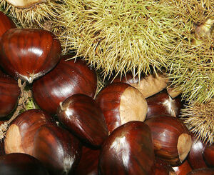 735px-Chestnuts02