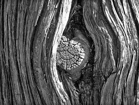 791px-TreeKnot
