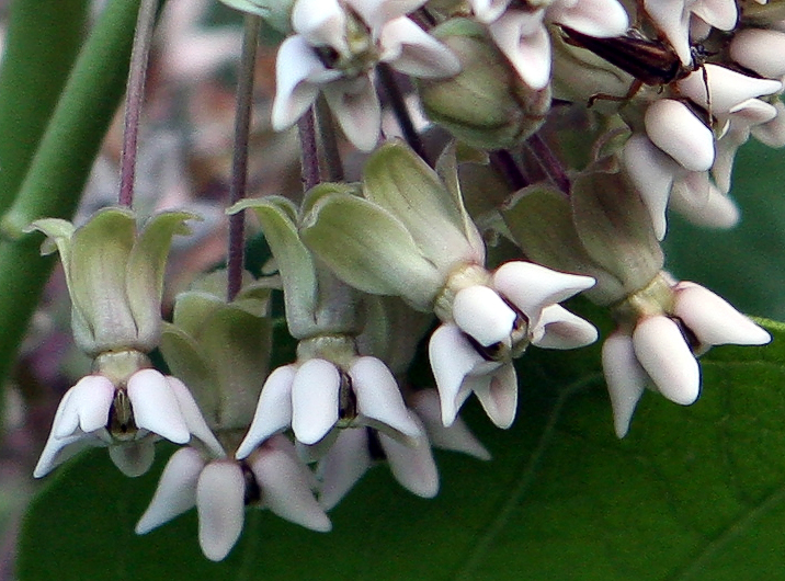 Plant Morphology Horticulture And Soil Science Wiki Fandom