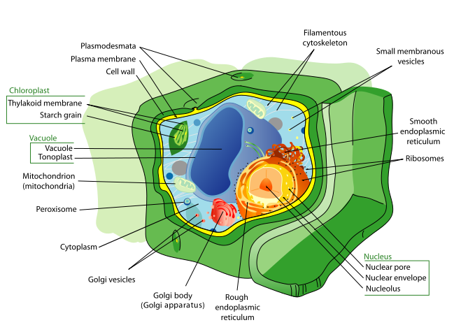 How a plant works horticulture and soil science wiki fandom before you take on any sort of activity with plants it is important to learn how a plant functions plants are living organisms just like humans and have ccuart Images