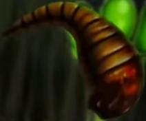 Leechy Slug