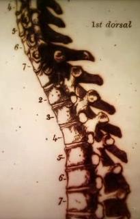 Title spine