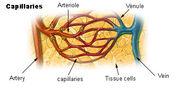 Illu capillary