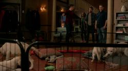 Oliver-puppy-break-608