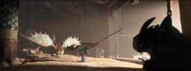 Parade nuptiale dragon vipere (2)