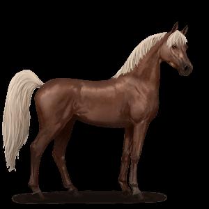 Koń czystej krwi arabskiej-nowy wygląd
