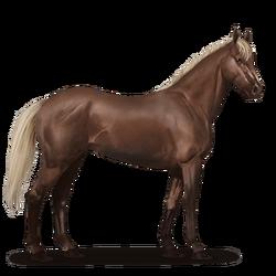 Koń pełnej krwi angielskiej-nowy wygląd