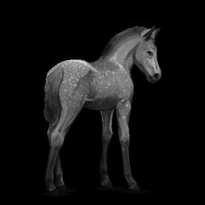 Fil:Akhal Teke Foal - Dapple Gray.png