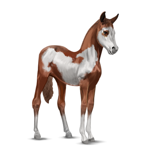 File:Paint Horse Foal - Chestnut Overo.png
