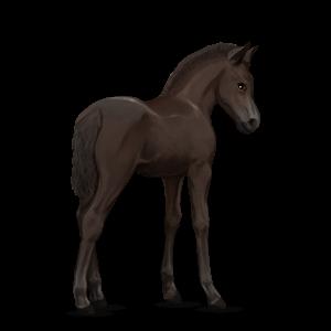 Fil:Akhal Teke Foal - Liver Chestnut.png