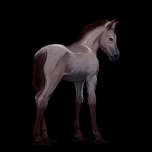 Fil:Akhal Teke Foal - Mouse Gray.png