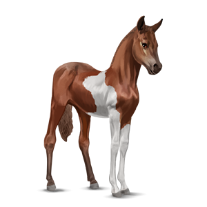 File:Paint Horse Foal - Chestnut Tobiano.png