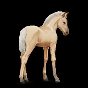 Fil:Akhal Teke Foal - Palomino.png