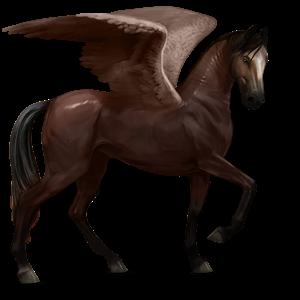 Fil:Akhal Teke Pegasus - Liver Chestnut.png