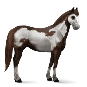Image Paint Horse Liver Chestnut Overo Png Howrse Wiki