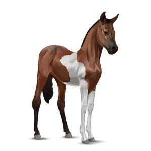 Paint Horse Howrse Wiki Fandom Powered By Wikia