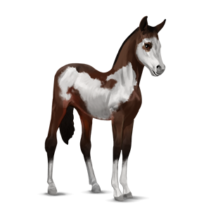 File:Paint Horse Foal - Dark Bay Overo.png