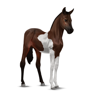 File:Paint Horse Foal - Dark Bay Tobiano.png