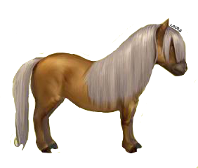 Palomino Shelty