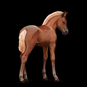 Fil:Akhal Teke Foal - Flaxen Chestnut.png