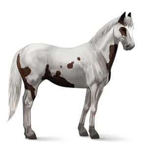 Image Paint Horse Liver Chestnut Tovero Png Howrse Wiki
