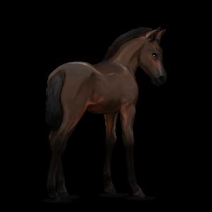 Fil:Akhal Teke Foal - Dark Bay.png