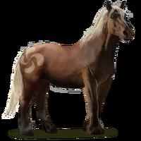 Pottok-Pony