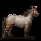 Quarter Pony Roan