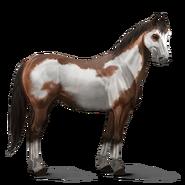 Paint Horse Brauner mit Overo-Scheckung Altes Design