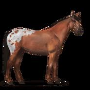 Mustang Rotschecke