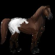 Mustang Schabrackendunkelfuchs Alt