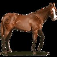 Shakleford-Pony