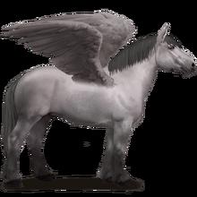 Percheron Pegasus Grau