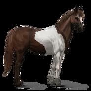 Paint Horse Dunkelfuchs mit Tobiano-Scheckung Altes Design