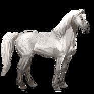 Mustang Forellenschimmel Alt