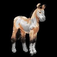 Paint Horse Isabell mit Overo-Scheckung Fohlen