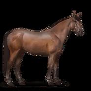 Mustang Brauner