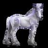 Greyfell 2 Fohlen