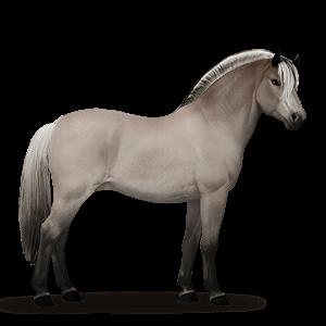Norweger Pferd Graufalben
