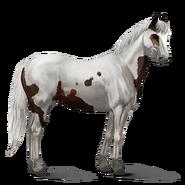Paint Horse Dunkelbrauner mit Tovero-Scheckung Altes Design