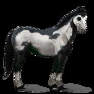 Paint Horse Rappe mit Overo-Scheckung Altes Design