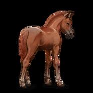 Connemara Pony Fuchs Fohlen Altes Design