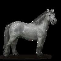 Connemara-Pony Apfelschimmel