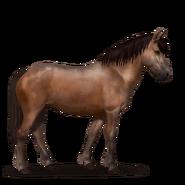 Neufundland Pony.Brauner