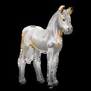 Paint Horse Palomino mit Tovero-Scheckung Fohlen