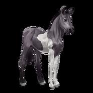 Paint Horse Mausgrauer mit Tobiano-Scheckung Fohlen