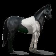 Paint Horse Rappe mit Tobiano-Scheckung Altes Design