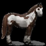 Paint Horse Dunkelfuchs mit Overo-Scheckung Altes Design