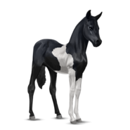 Paint Horse Rappe mit Tobiano-Scheckung Fohlen